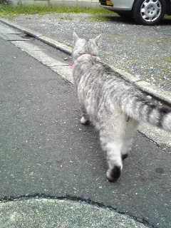 なつっこい猫(その2)